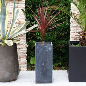 planter-cuatro